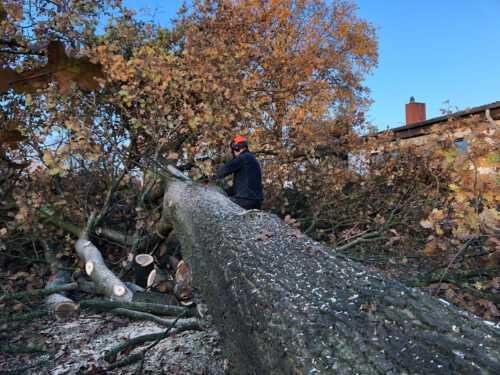 Notfällungen bei Sturmschäden
